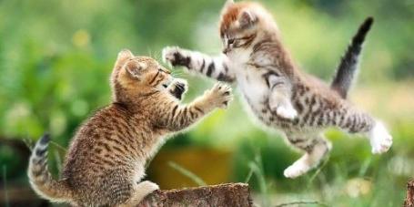 flying-cat-fight1