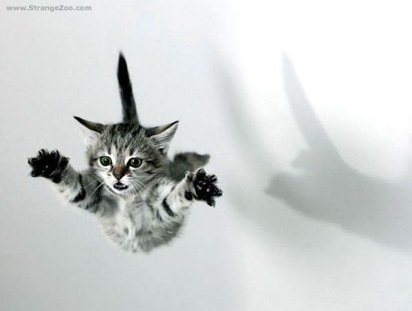 flying cat re-creation