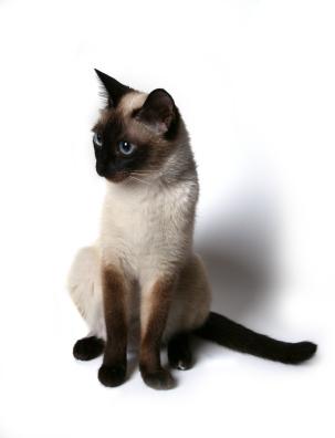 Human catform