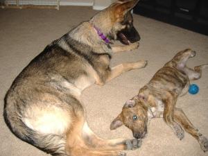 Reeses and Nala
